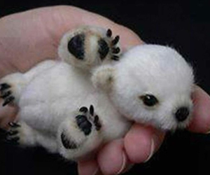 animals, small, and cute image