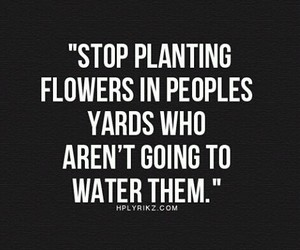 quotes, flowers, and stop image