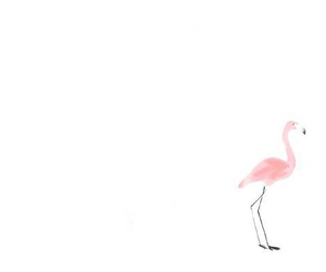 cool, flamingo, and pink image