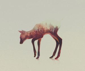 animal, edit, and pretty image