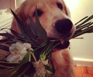dog, flowers, and love image