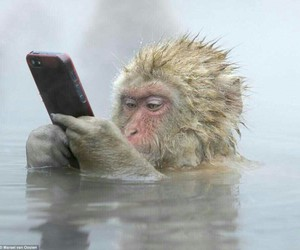 monkey, funny, and iphone image