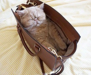 bag, cat, and good morning image