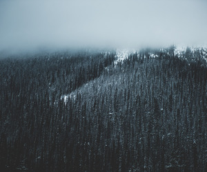 forest, beaufitul, and mountains image