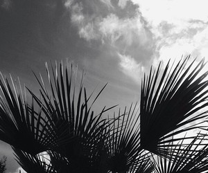 summer, black and white, and palms image
