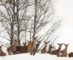 tree and deer image