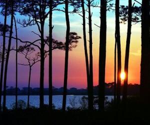 sunset, tree, and sun image