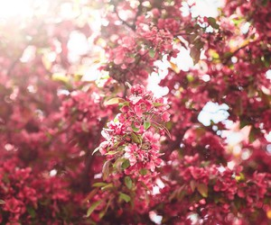 flowers, may, and nature image