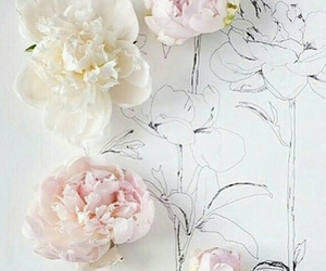 flowers, pastel, and peonies image