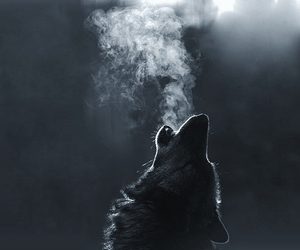 animals, inspiration, and wolves image