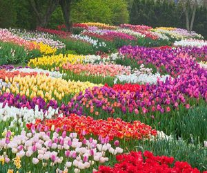 pennsylvania and longwood gardens image
