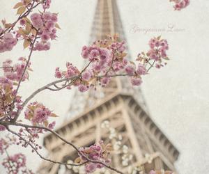 paris, flowers, and spring image