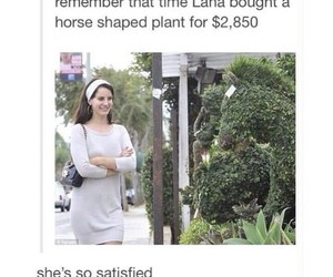 funny and lana del rey image