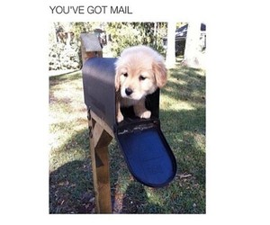 puppy, dog, and mail image