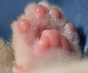 cat, paws, and pink image
