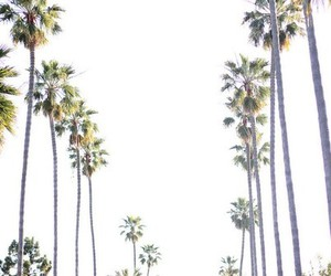 summer, palms, and california image