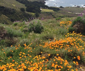 flowers, places, and sea image