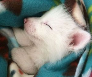 fox, cute, and white image