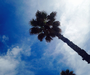 blu, palm, and sky image