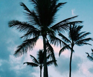 sky, palm trees, and summer image