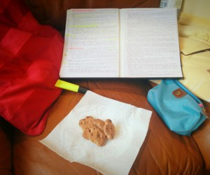 biscuits, law student, and exams image