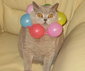 cat, balloons, and funny image