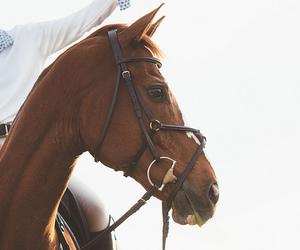 equestrian, horses, and pferd image
