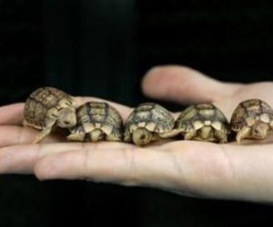 turtle, baby, and cute image