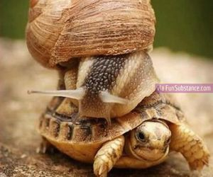 funny, snail, and turtle image