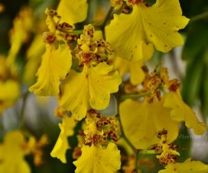 amarillo, orquidea, and health image
