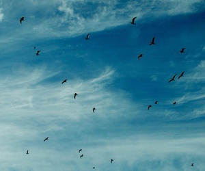 bird, blue sky, and clouds image
