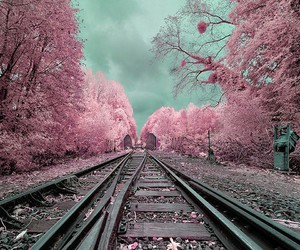 pink, tree, and train image