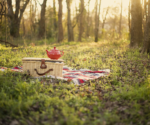 picnic, tea, and forest image