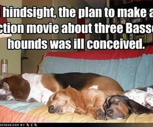 dog, hounds, and Lazy image