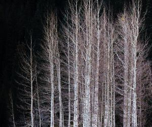 autumn, birches, and dark image