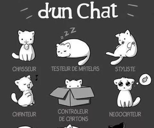 cat, cv, and chat image