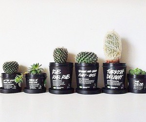 cactus, plants, and lush image