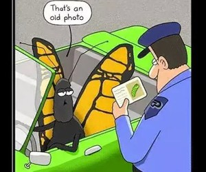 funny, butterfly, and lol image