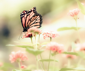 flowers, buterflies, and inspiration image