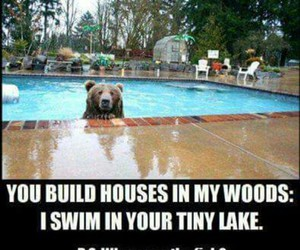bear, pool, and cute image