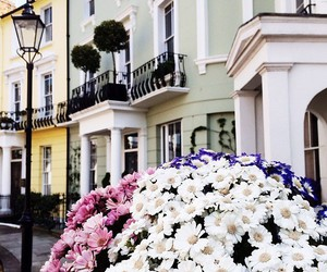 beautiful, british, and floral image