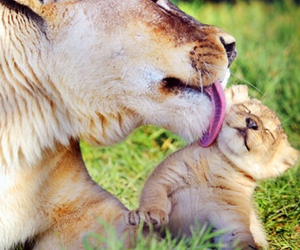 amazing, fur, and kisses image
