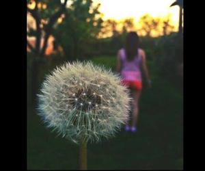 black, dandelion, and flower image