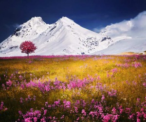 mountains, flowers, and landscape image