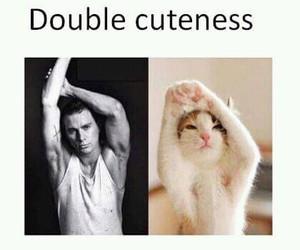 cat, cute, and channing tatum image