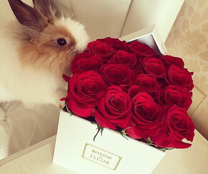 flowers, rose, and rabbit image