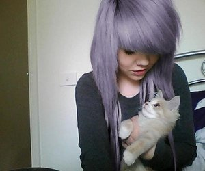 cat, kitten, and violet image