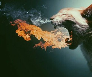 cat, fire, and animal image