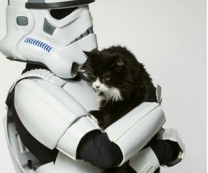 cat, star wars, and stormtrooper image