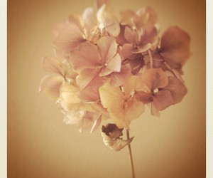 beautiful, vintage, and flower image